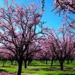 ¿Qué alimentos son recomendables en primavera?